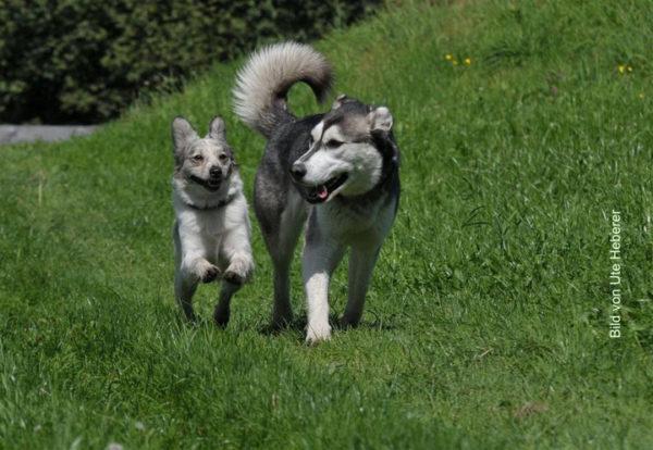 Hundefreunde