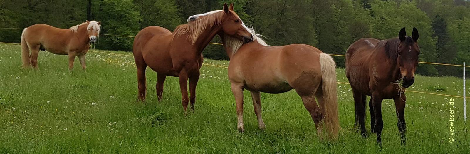 Workshop Wundversorgung beim Pferd