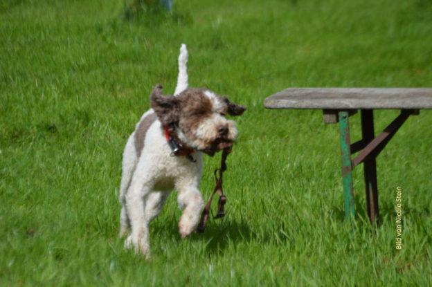 Suchender Hund