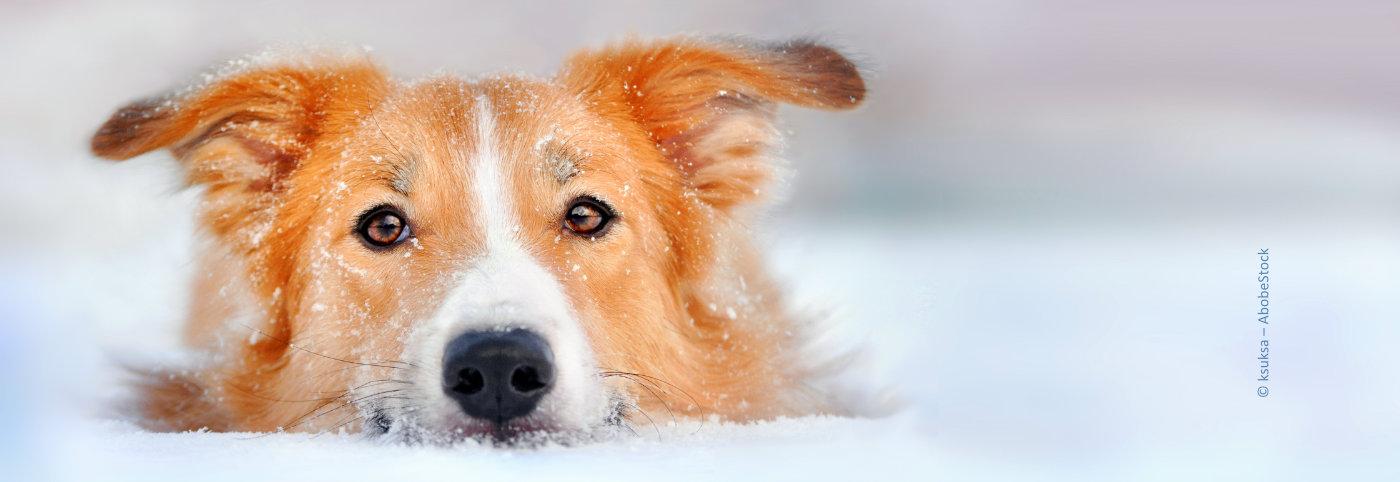Die häufigsten Erkrankungen beim Hund Teil 2
